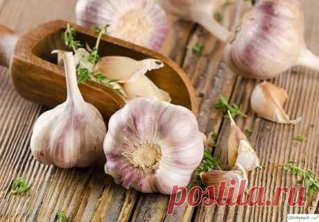 Советы по выращиванию чеснока. Важно знать!