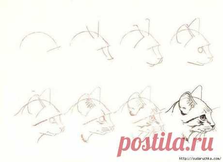 Учимся рисовать животных. Живопись.. Обсуждение на LiveInternet