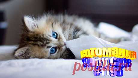 Любите смотреть приколы про котов? Тогда мы уверены, Вам понравится наше видео 😍. Также на котомании Вас ждут: видео кот,видео кота,видео коте,видео котов,видео кошек,видео кошка,видео кошки,видео о котах, видео прикол, видео смешные кошка, кот видео, котики мило, кошка видео смешное, кошки, приколы про животных до слез, про кошек смешных, самые смешные животные, самые смешные кошки, смешной кот, смешные кошки видео