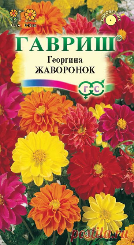 """Георгина """"Жаворонок"""", смесь"""