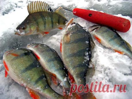 Монтаж сдвоенных мормышек при ловле со льда .