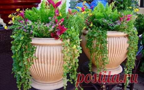 Украшение участка: вазоны и цветы   6 соток