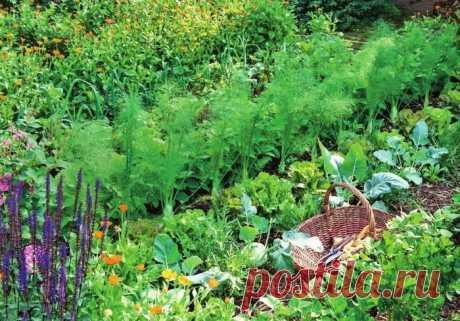 Какие растения нельзя садить друг с другом и почему | Делимся советами