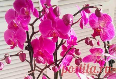 Как ухаживать за орхидеей дома? Покажу и расскажу...