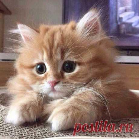 Ну, очень смешные котики! Держитесь за животики! | Белые Лапки | Яндекс Дзен