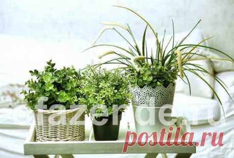 Всего 7 приемов, чтобы комнатные цветы росли как на дрожжах | О Фазенде. Загородная жизнь | Яндекс Дзен
