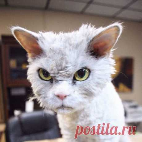 Самый злой кот в мире с большими глазами влюбил соцсети (ФОТО)