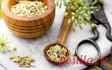 Семена укропа: лечебные свойства и противопоказания