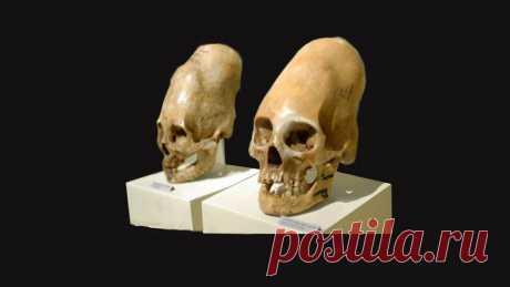Что показал ДНК анализ аномально деформированных черепов, найденных в Перу