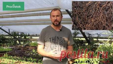 Вредители растений. Нематода - серьезная угроза вашему урожаю. 3 способа избавиться от нематоды