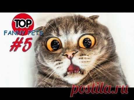 Лучшие приколы 2019, топ смешных видео с котами, собаками. Смешные животные со всего мира! Смешные кошки, приколы с котами до слез под музыку, смешные коты, ...
