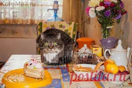 "Cake ""Вася"")"