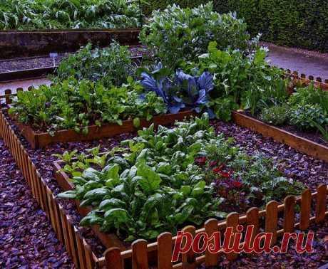 Использование соли на огороде — Полезные советы