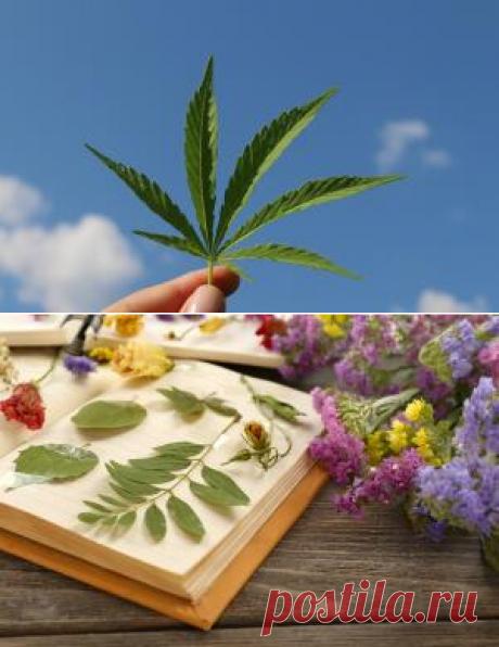 Флористика. Как заготавливать природные материалы для творческих работ?  | Культура