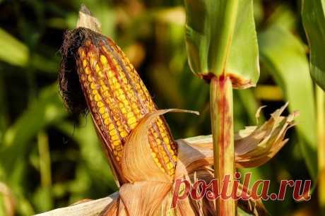 Что сажать в начале октября, чтобы получить ранний урожай Какие культуры стоит посадить на даче в начале осени, чтобы быстро получить урожай.