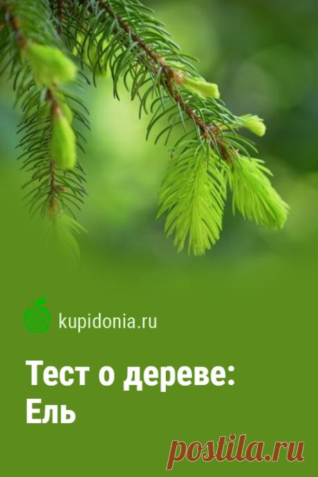 Тест о дереве: Ель. Интересный тест о ели из серии тестов о деревьях. Проверьте свои знания!