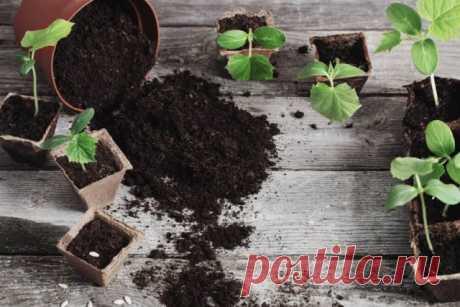 Земля для рассады – такая как надо | Почва и плодородие (Огород.ru)