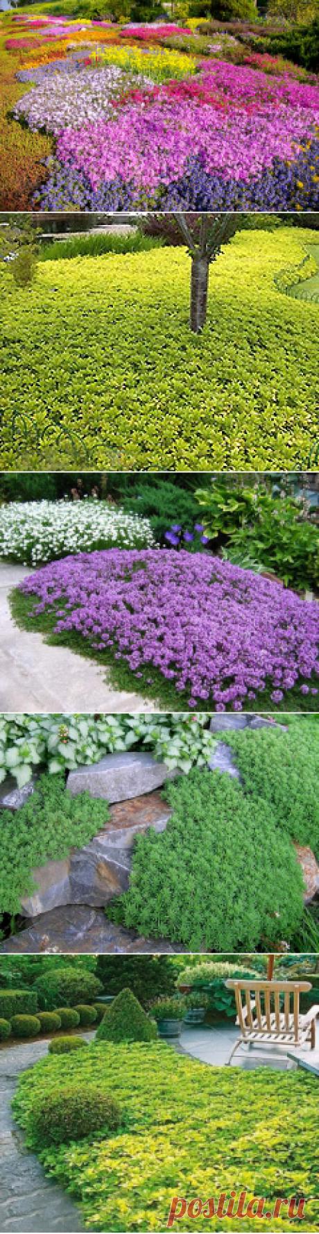 Мастера и умники: Почвопокровные садовые растения. Особенности выращивания и размножения