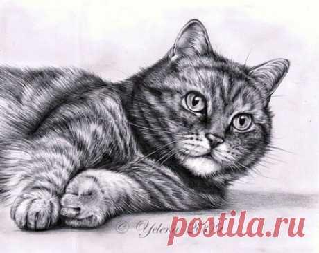 Рисуем кошку карандашом — Сделай сам, идеи для творчества - DIY Ideas