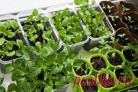 Когда и что сажать на рассаду — Садоводка