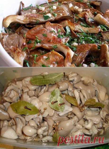 Вешенки – готовим полезные «деликатесы» / Простые рецепты
