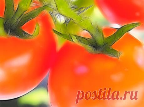 5 способов ускорения созревания томатов | Дачная жизнь | Яндекс Дзен