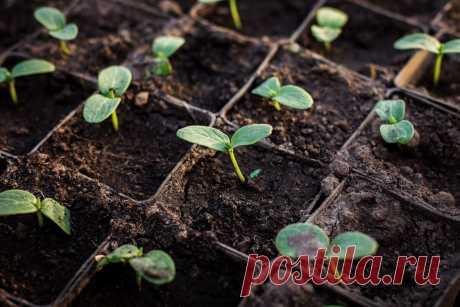 Лунный календарь дачника на 30 марта - 5 апреля 2020   Садовичок   Яндекс Дзен