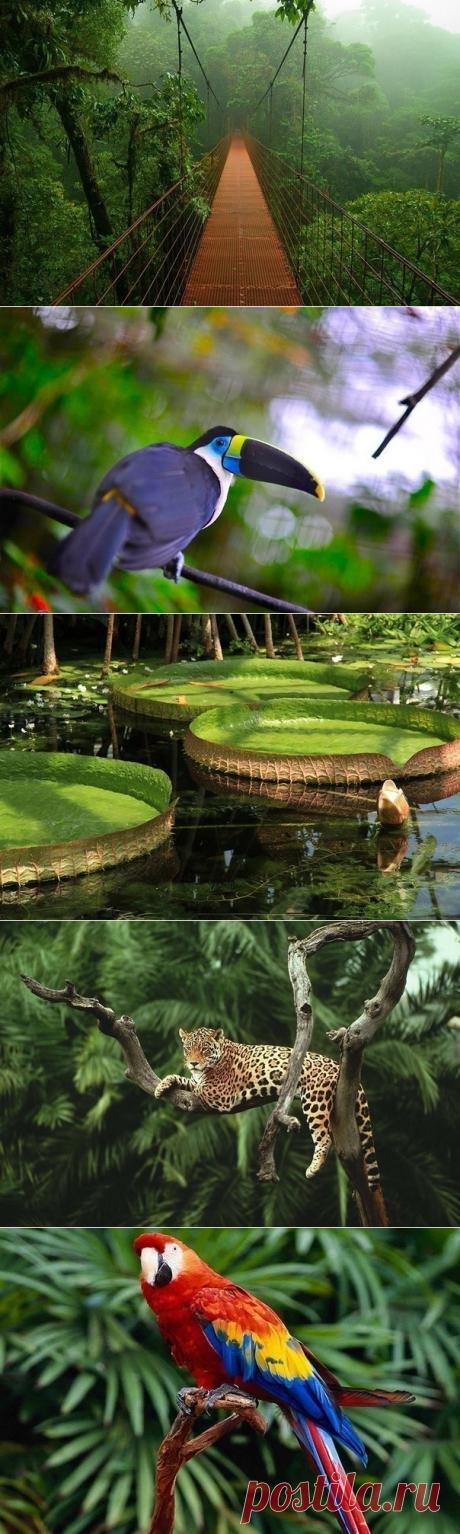 Тропические леса Амазонки - Путешествуем вместе
