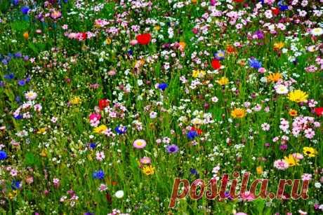 Полевые цветы Скачать картинку 5184x3456 Полевые цветы