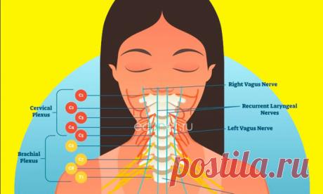 Как навсегда забыть о высоком давлении: 9 упражнений доктора ШИШОНИНА | Dusea.ru | Первый женский