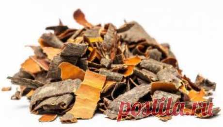 Кора осины при диабете: лечебные свойства, настои и отвары Кора осины при диабете: состав и полезные свойства. Как нужно верно заготавливать и хранить кору осины при диабете 2 типа? Как пить отвар из коры осины? Как заваривать чай из коры осины?
