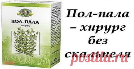«Пол-пала — чудо трава» — рассказываем, почему она так полезна для организма человека