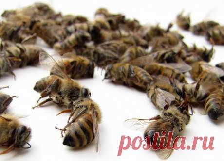 Лечение гипертонии пчелиным подмором. Просто и эффективно! Лечение гипертонии пчелиным подмором. Просто и эффективно! Такое средство нормализует давление на длительное время, а не просто кратковременно его собьёт