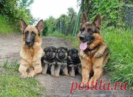 20 фотографий звериных семей, которые растопят ваши сердца / Домоседы