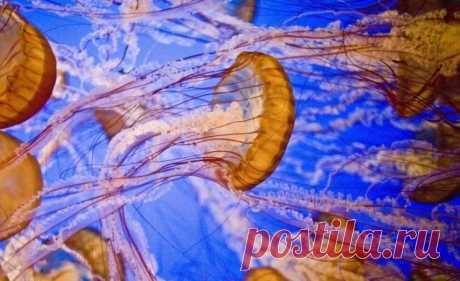Интересное о медузах - Путешествуем вместе