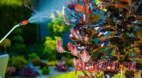 Осенняя профилактика сада Хочешь весной увидеть свой сад здоровым – начинай профилактику осенью! Как, когда и чем обрабатывать разные культуры? Плодовые деревья и кустарники После листопада применяют медьсодержащие препараты: 3%-ную бордоскую жидкость либо хлорокись меди, а также системные фунгициды («Скор», «Хорус») и...