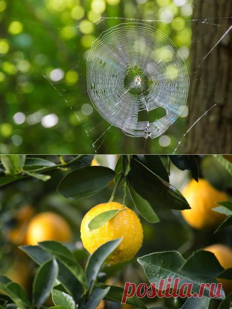 А я использую лимон очень необычно | В ЖИЗНИ это ПРИГОДИТСЯ | Яндекс Дзен