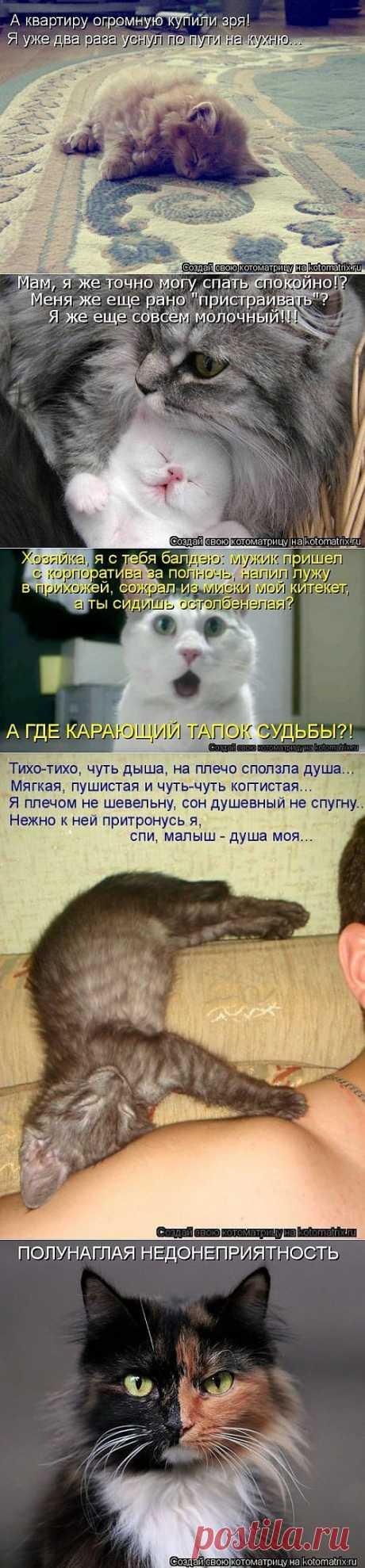 Лучшая котоматрица за неделю / Питомцы