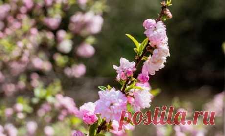 15 декоративных растений для обрезки в мае | В цветнике (Огород.ru)