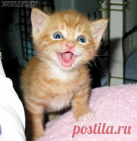 Радоваться жизни со мной)))