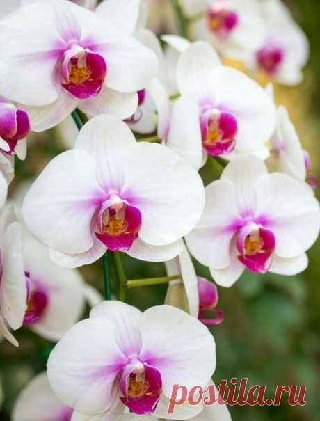 Чеснок посто находка для шикарного цветения... | Моя усадьба | Яндекс Дзен