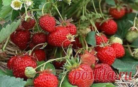 La fresa es sobrealimentada por tres veces por año