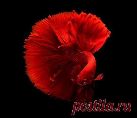 бордовый цвет в природе - Поиск в Google