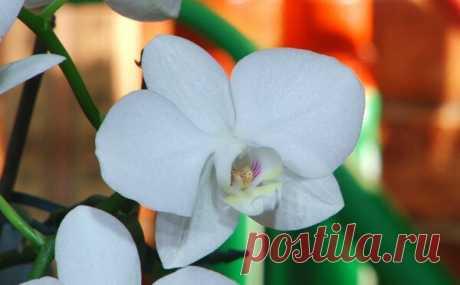 7 правил для выращивания орхидей | Виталий Декабрев | Яндекс Дзен