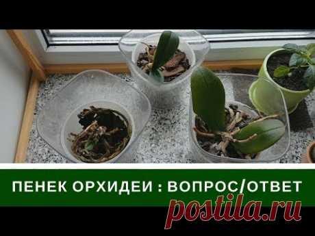 Пенек Орхидеи Что Будет - YouTube