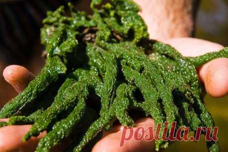 Бадяга: Разрыв шаблона. Это животное, а не растение. Но почему зелёное? Почему не двигается? | Рекомендательная система Пульс Mail.ru