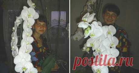 Пышное цветение орхидеи гарантировано, если пересадить её в такую емкость Совсем недавно я приобрела орхидею, которая никак не хотела приживаться в обычном пластиковом горшке. В последствии оказалось, что корни фаленопсиса были очень чувствительны к избытку влаги в емкости:…
