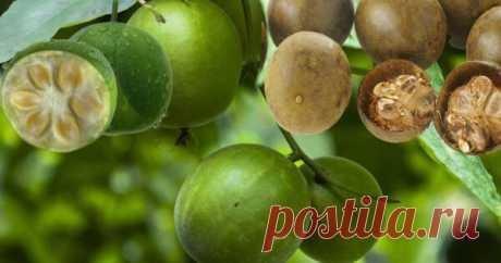 Плоды лианы архат, называемые фруктами Будды или монахами, использовались в лечебных целях на протяжении тысячелетий. Сегодня их применяют в качестве натурального подсластителя. Фрукт буддийских...
