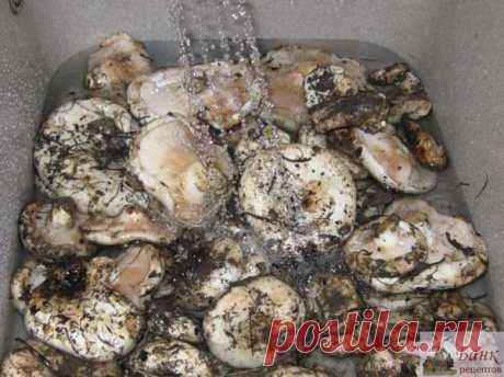 How to salt milk mushrooms (the recipe and a photo)