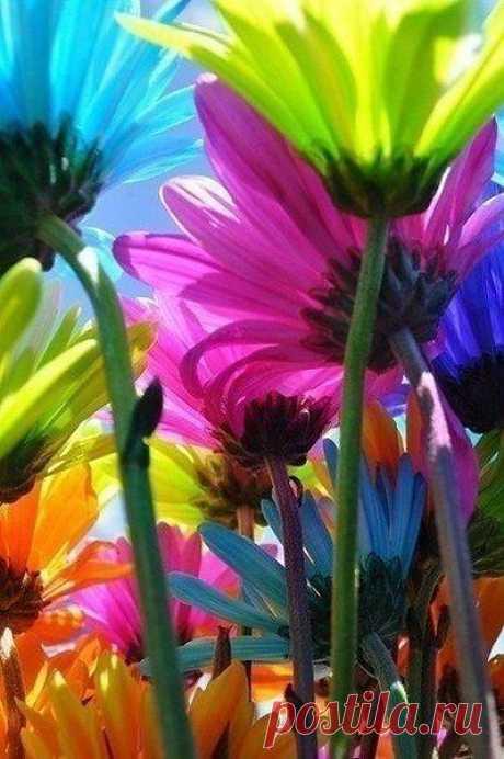 ...чтобы в жизни было как можно больше ярких красок